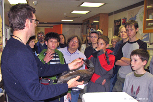 Jeremy shows us a Brandt's Cormorant from Oregon, photo by Mary Batcheller