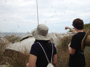 Terns were everywhere! Photo by Sue Freiburger